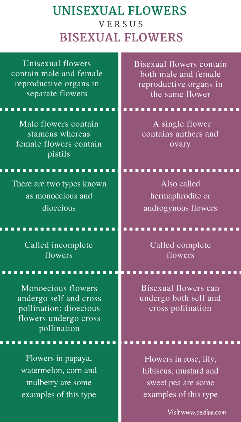 Difference Between Unisexual and Bisexual Flowers - Comparison Summary