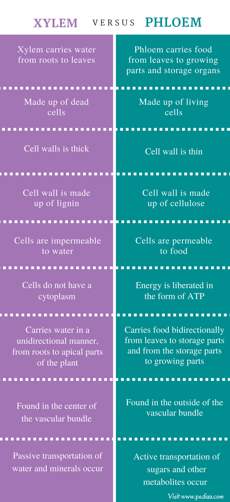 Difference Between Xylem and Phloem - Comparison Summary