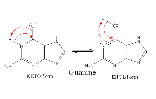Main Difference - Adenine vs Guanine