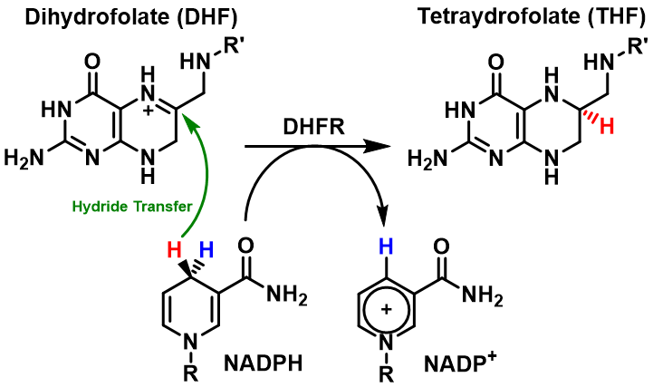 Difference Between Coenzyme and Cofactor