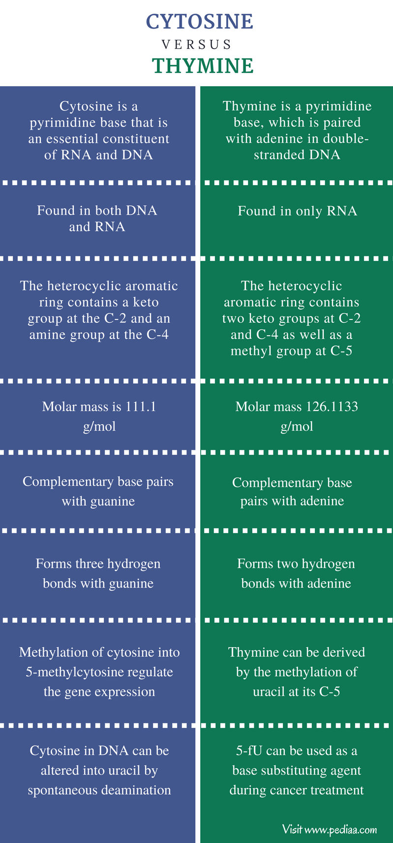 Difference Between Cytosine and Thymine - Comparison Summary