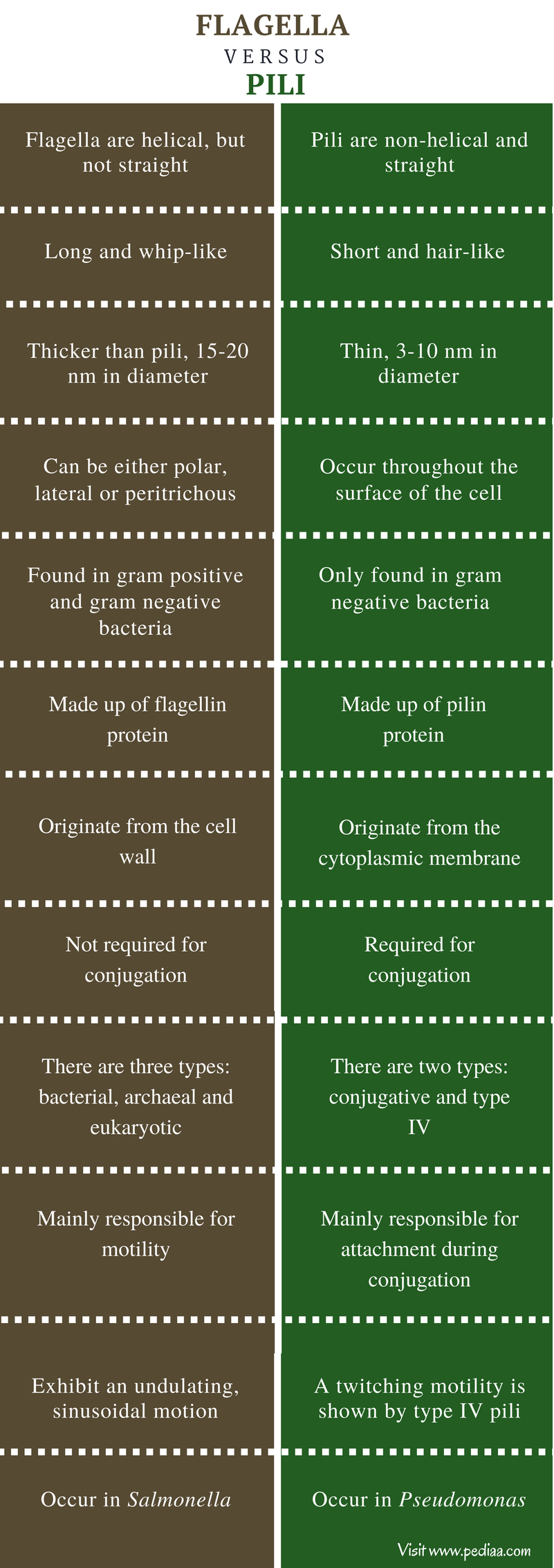 Difference Between Flagella and Pilli - Comparison Summary