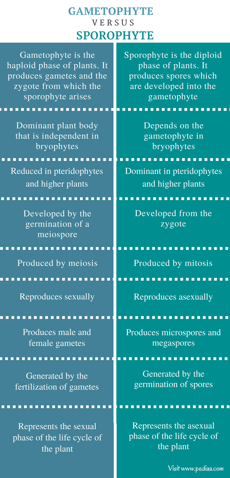 Difference Between Gametophyte and Sporophyte - Comparison Summary