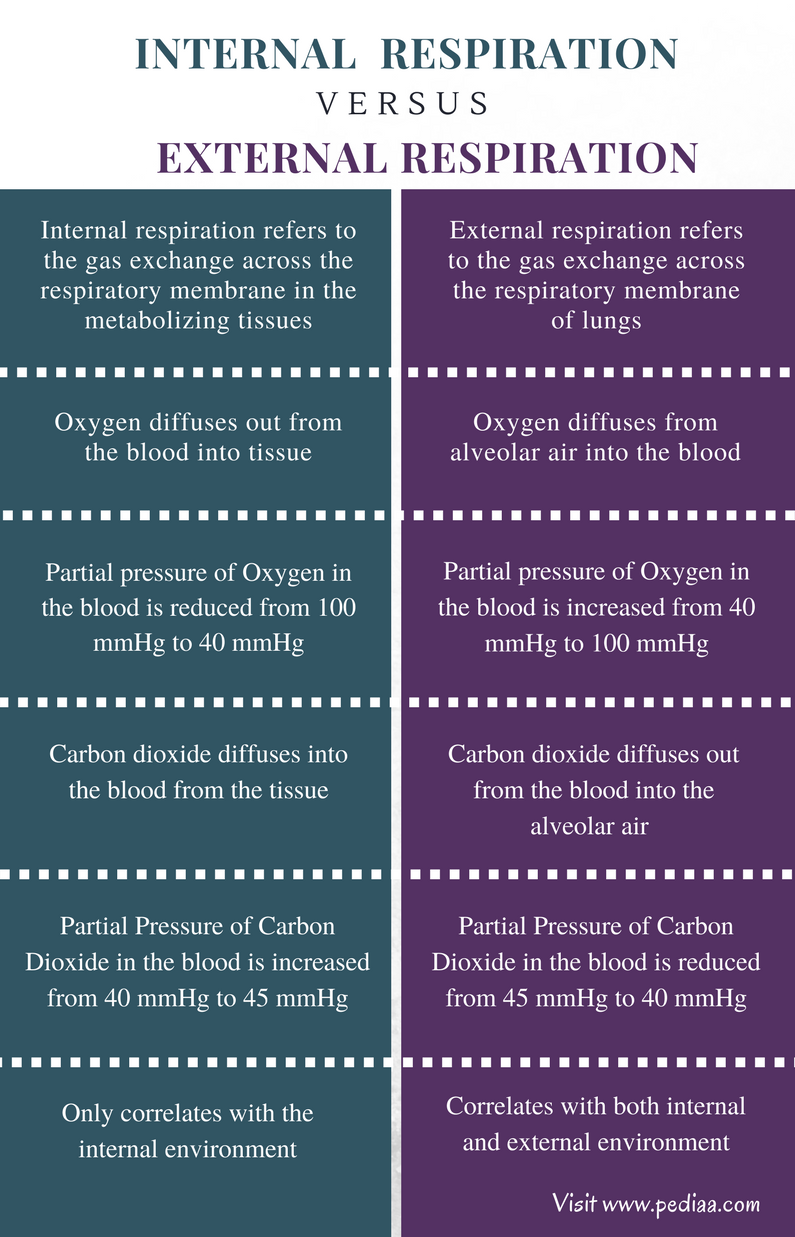 Difference Between Internal and External Respiration - Comparison Summary