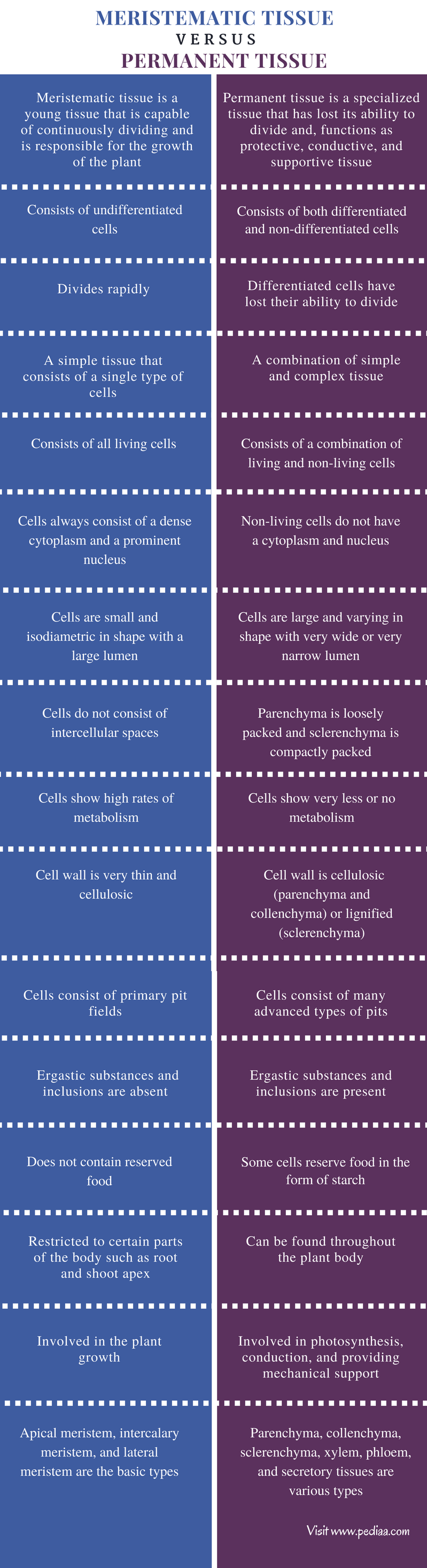 Difference Between Meristematic Tissue and Permanent Tissue - Comparison Summary