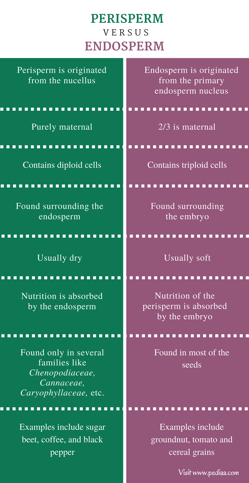 Difference Between Perisperm and Endosperm - Comparison Summary