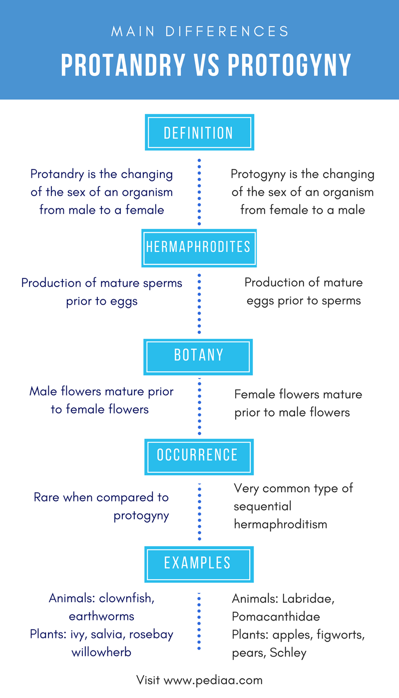 Difference between protandry and protogyny definition difference between protandry and protogyny comparison summary voltagebd Choice Image