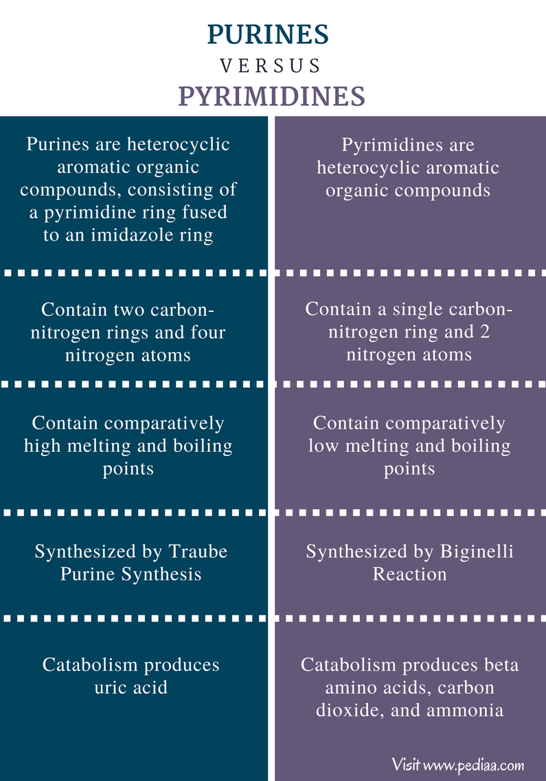 Difference Between Purines and Pyrimidines - Comparison Summary