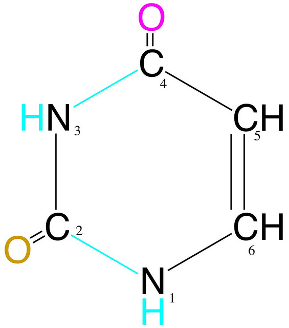 Difference Between Uracil and Thymine – Pediaa.Com  Difference Betw...