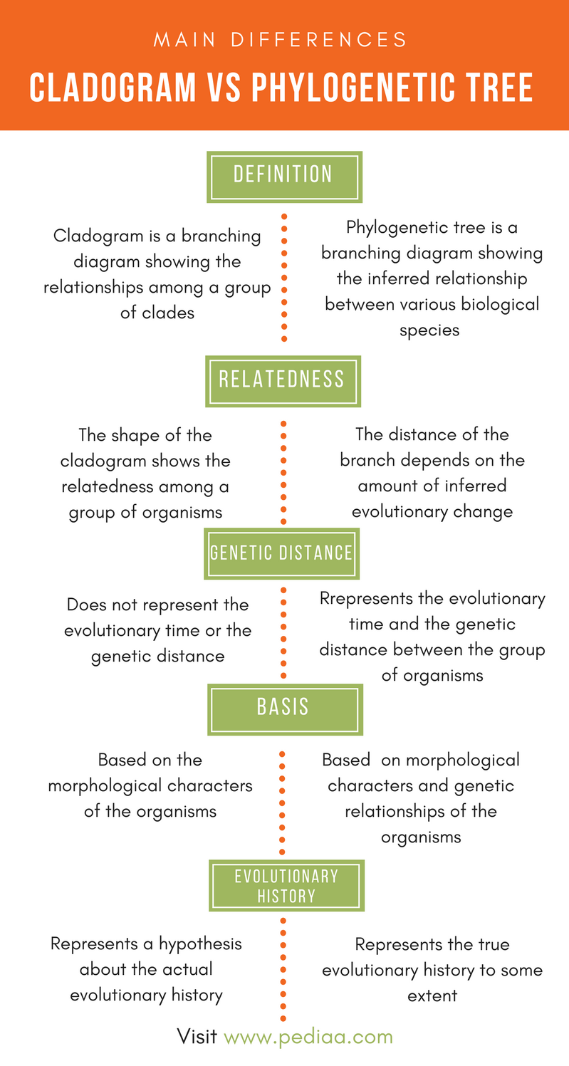 Difference Between Cladogram and Phylogenetic Tree - Comparison Summary
