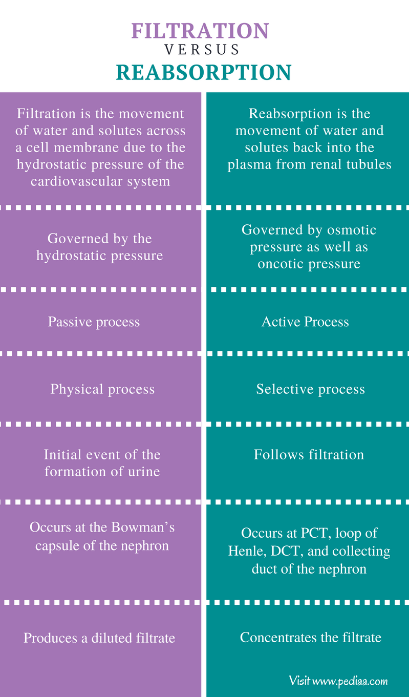 Difference Between Filtration and Reabsorption - Comparison Summary