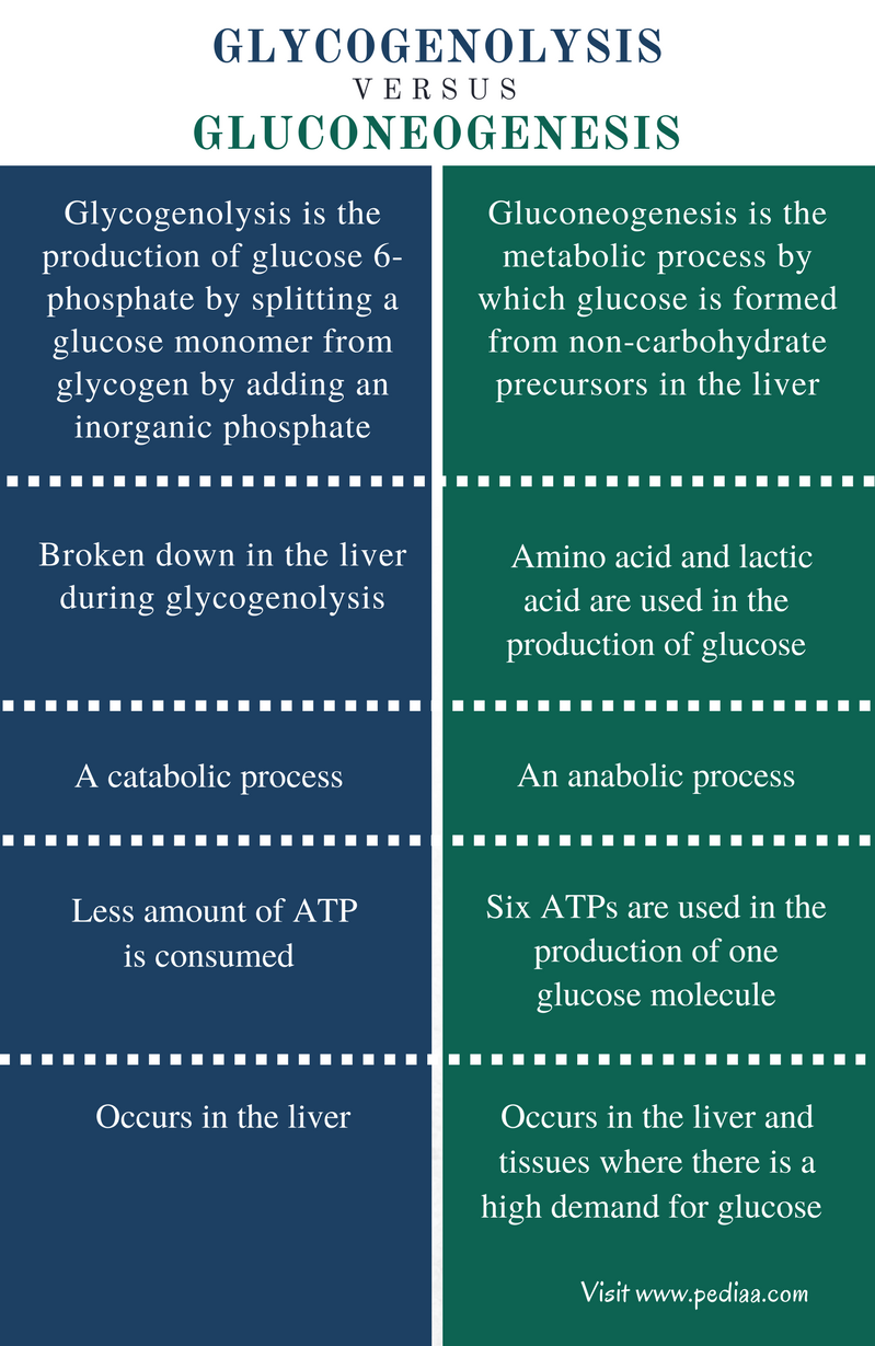 Difference Between Glycogenolysis and Gluconeogenesis - Comparison Summary