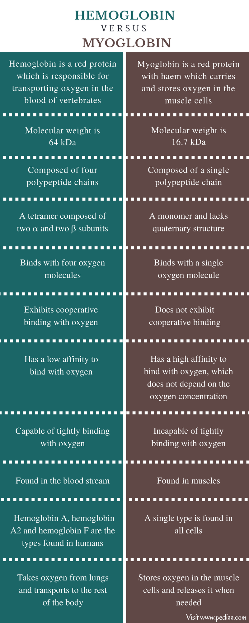 Difference Between Hemoglobin and Myoglobin - Comparison Summary