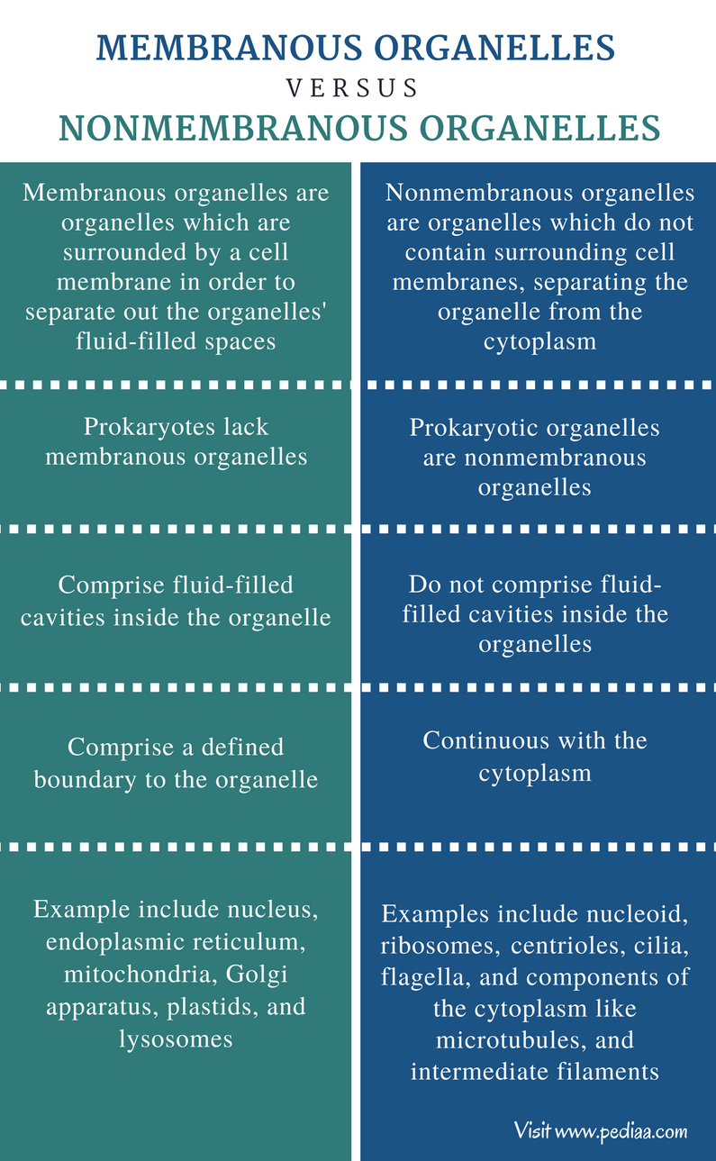 Difference Between Membranous and Nonmembranous Organelles - Comparison Summary