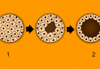 Difference Between Morula and Blastula