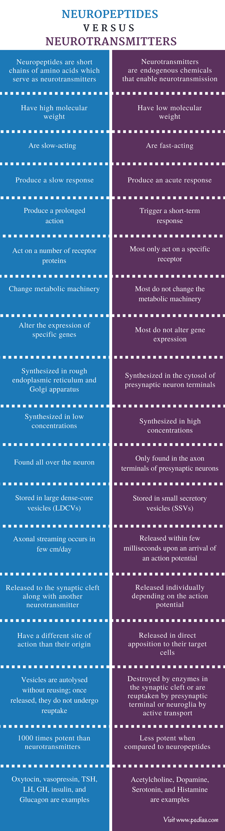 Difference Between Neuropeptides and Neurotransmitters - Comparison Summary