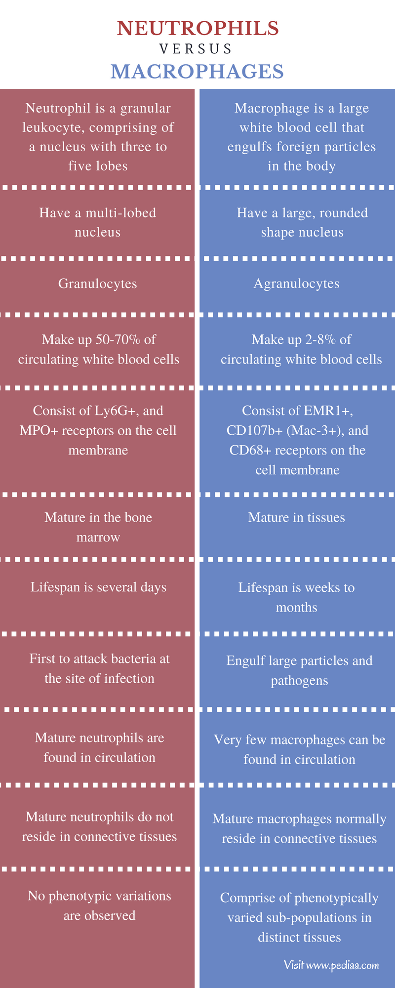Difference Between Neutrophils and Macrophages - Comparison Summary