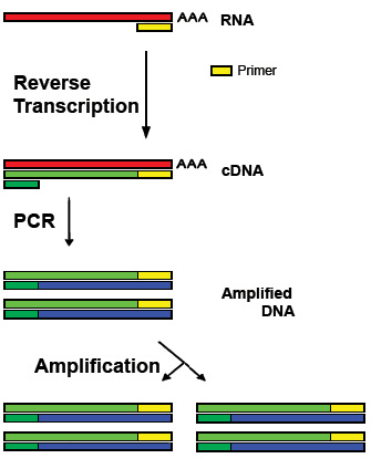 Difference Between PCR and RT PCR - 3