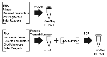 Difference Between PCR and RT PCR - 4
