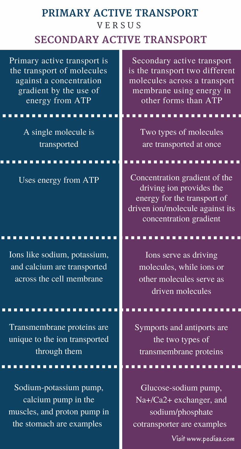 Difference Between Primary and Secondary Active Transport - Comparison Summary