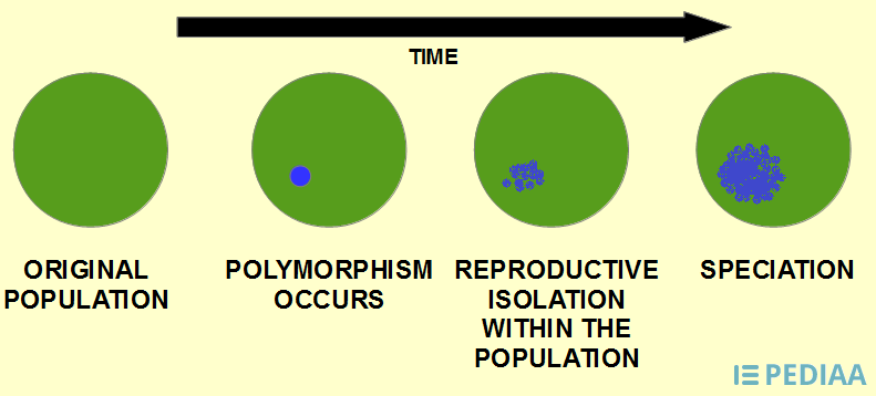Main Difference -  Allopatric vs Sympatric Speciation
