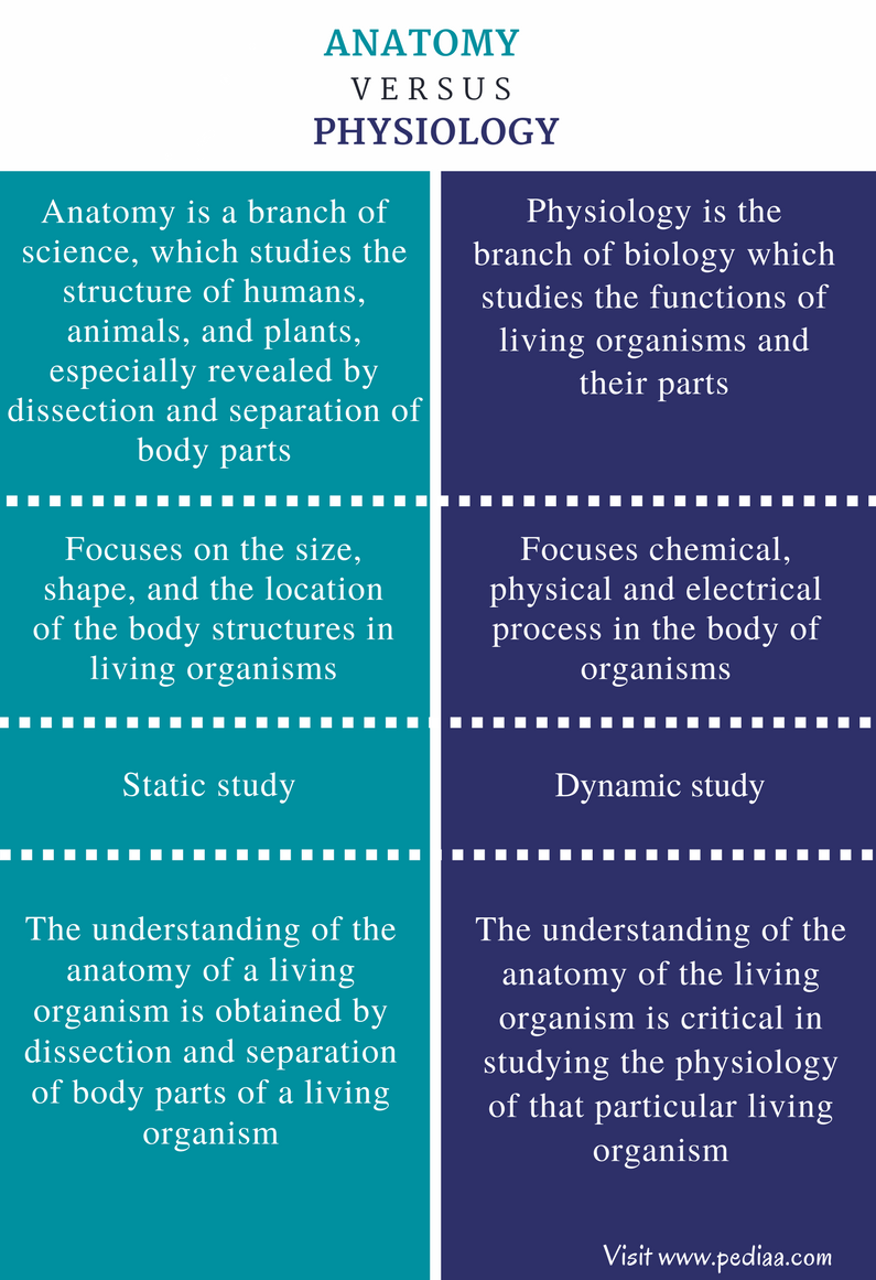 Difference Between Anatomy and Physiology | Definition ...