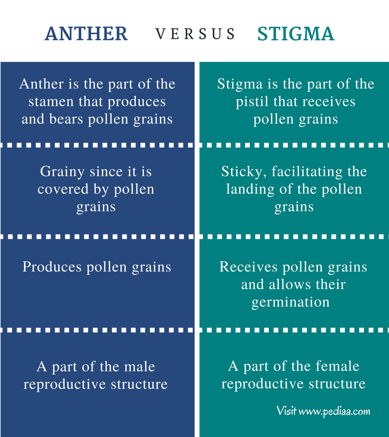 Difference Between Anther and Stigma - Comparison Summary