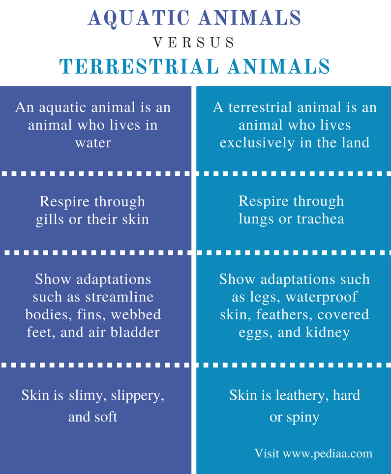 Difference Between Aquatic And Terrestrial Animals
