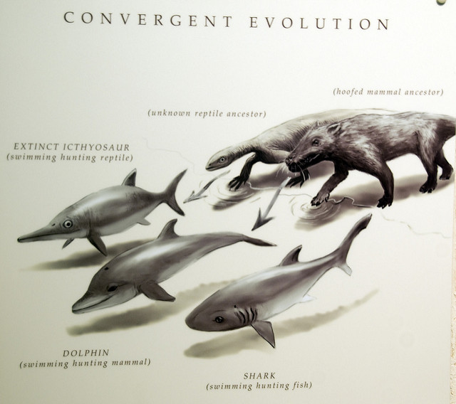Main Difference - Convergent vs Divergent Evolution
