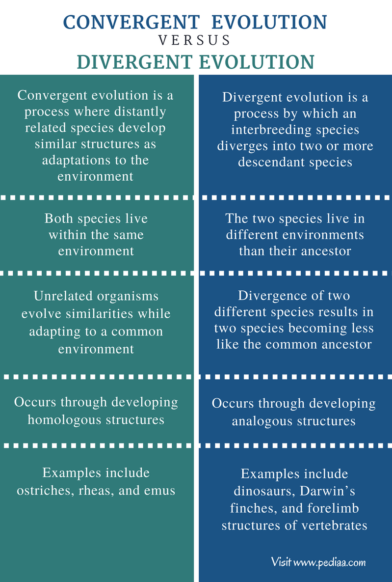 Difference Between Convergent and Divergent Evolution - Comparison Summary