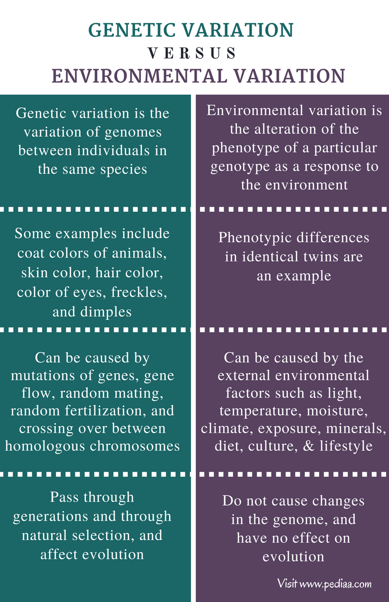 Difference Between Genetic Variation vs Environmental Variation - Comparison Summary