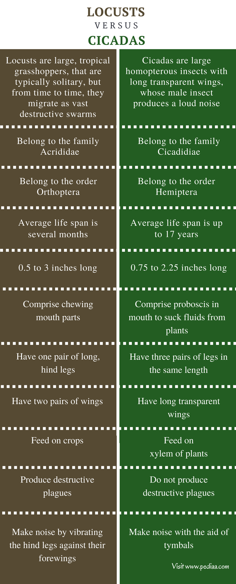 Difference Between Locusts and Cicadas - Comparison Summary