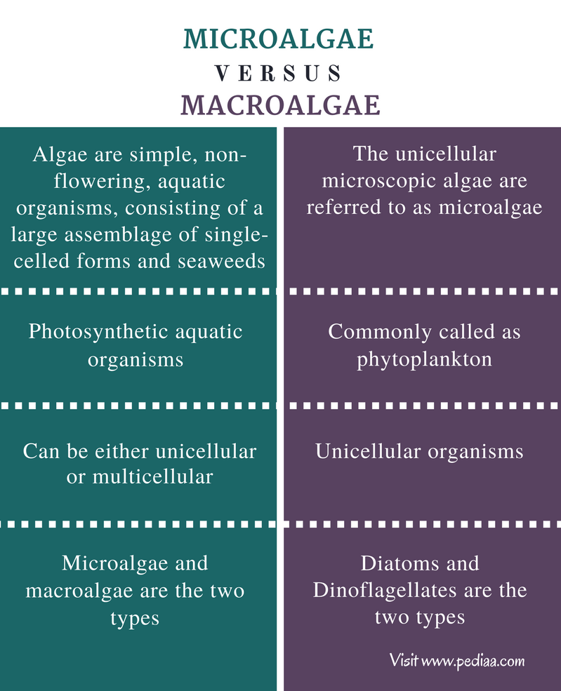 Difference Between Microalgae and Macroalgae - Comparison Summary