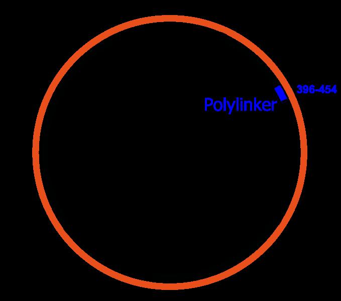 Main Difference - Plastid vs Plasmid