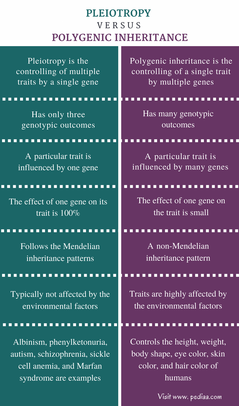 Difference Between Pleiotropy and Polygenic Inheritance - Comparison Summary