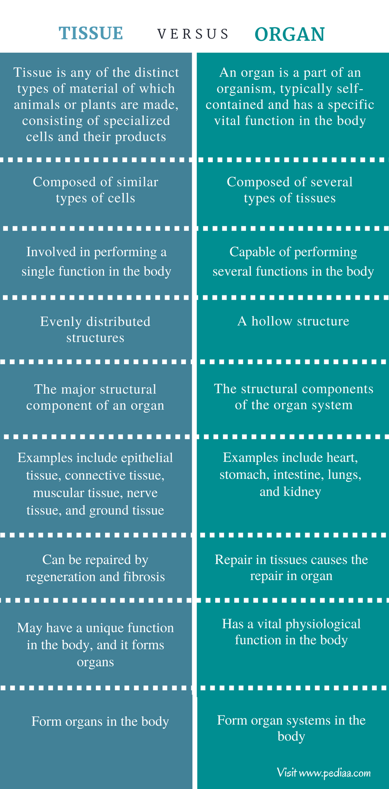 Difference Between Tissue and Organ - Comparison Summary