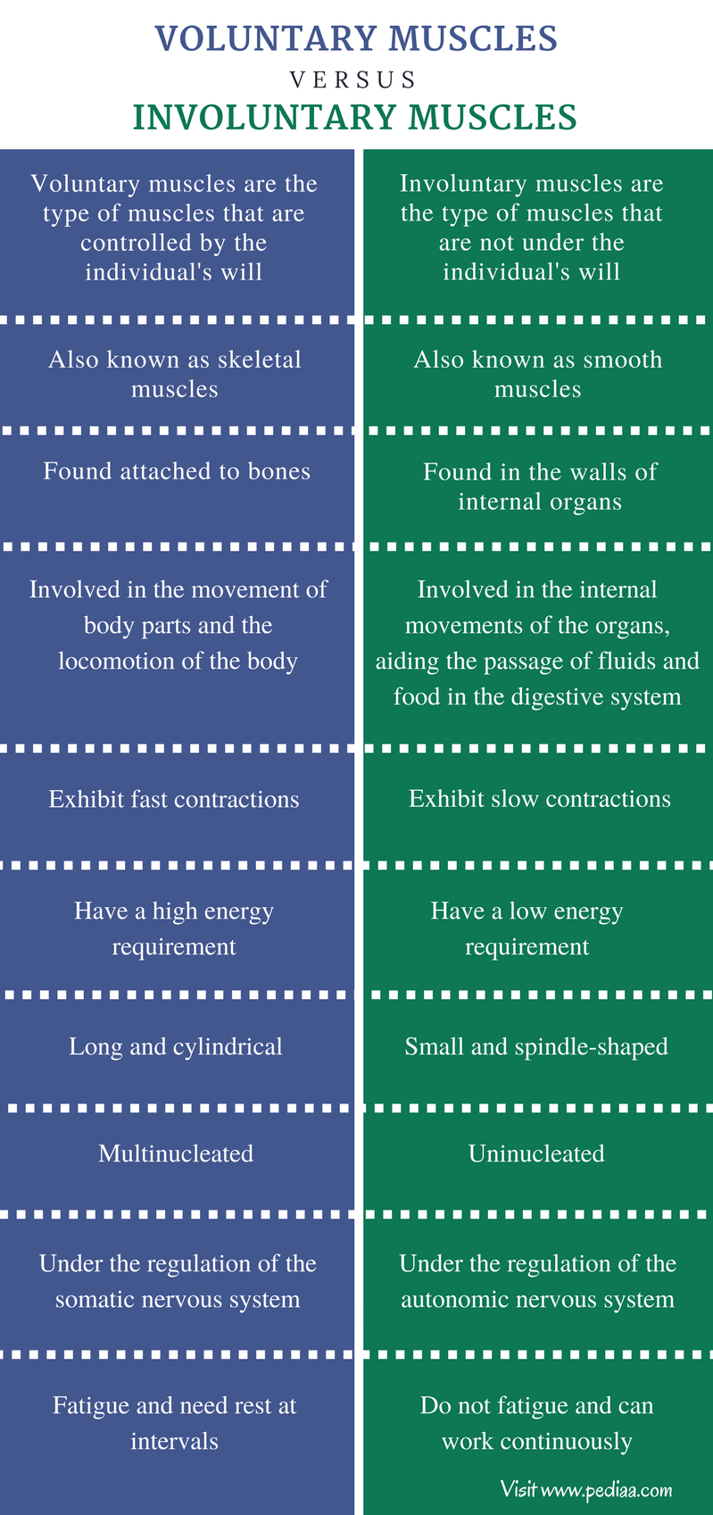 Difference Between Voluntary and Involuntary Muscles - Comparison Summary