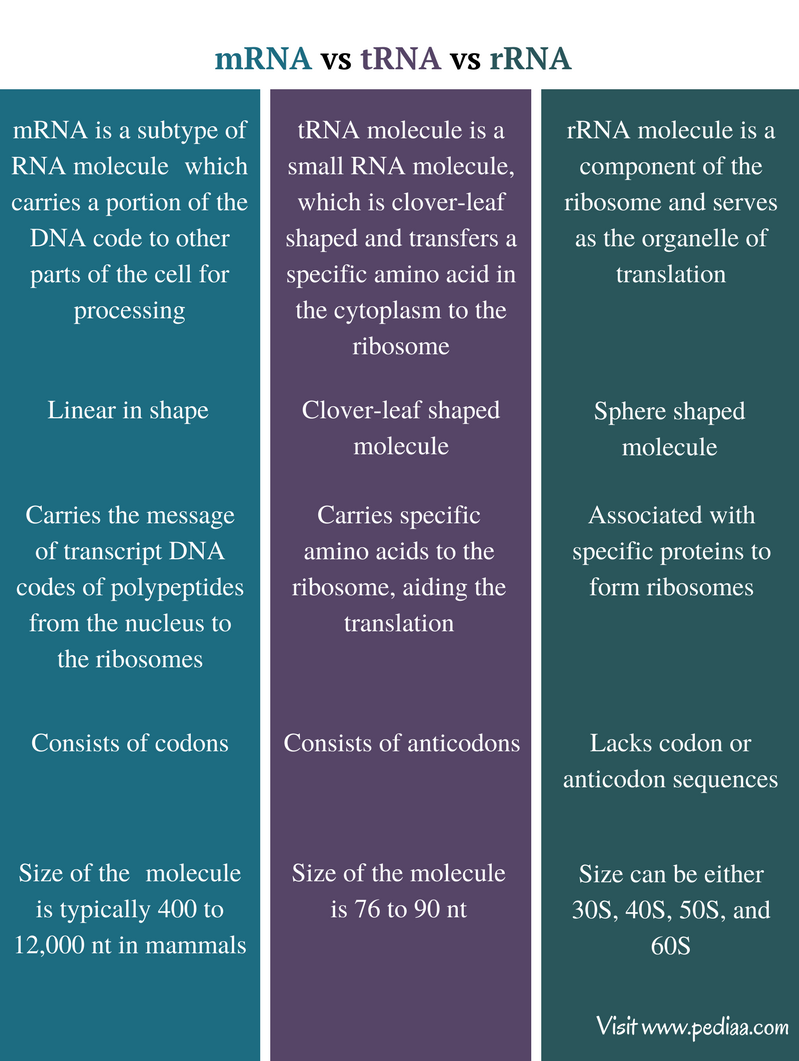 what is the relationship between dna rna ribosomes and proteins