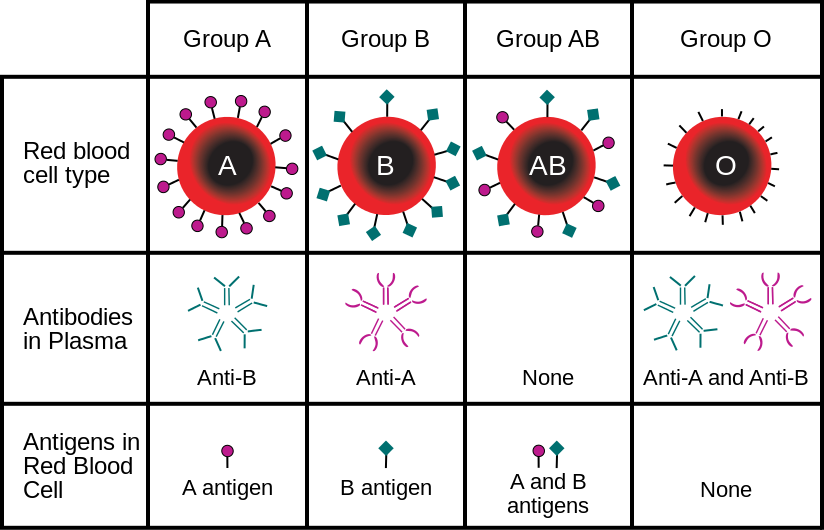 Difference Between ABO Blood Group and RH Blood Group