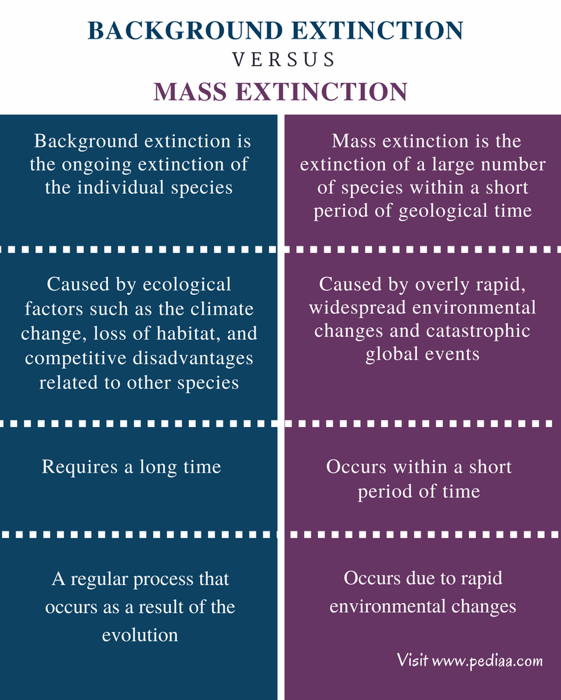 extinction what is it Study reveals rate of extinction for species in the 20th century has been up to 100 times higher than would have been normal without human impact.