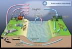 Difference Between Carbon Cycle and Nitrogen Cycle
