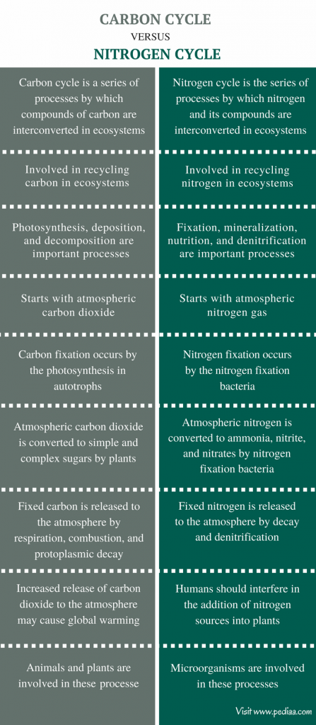 Difference Between Carbon Cycle and Nitrogen Cycle - Comparison Summary