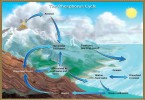 Difference Between Carbon and Phosphorus Cycle