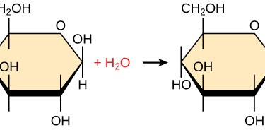 Difference Between Condensation and Hydrolysis