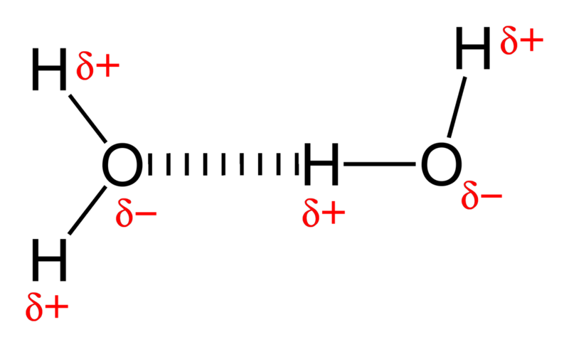 Main Difference - Covalent vs Hydrogen Bonds