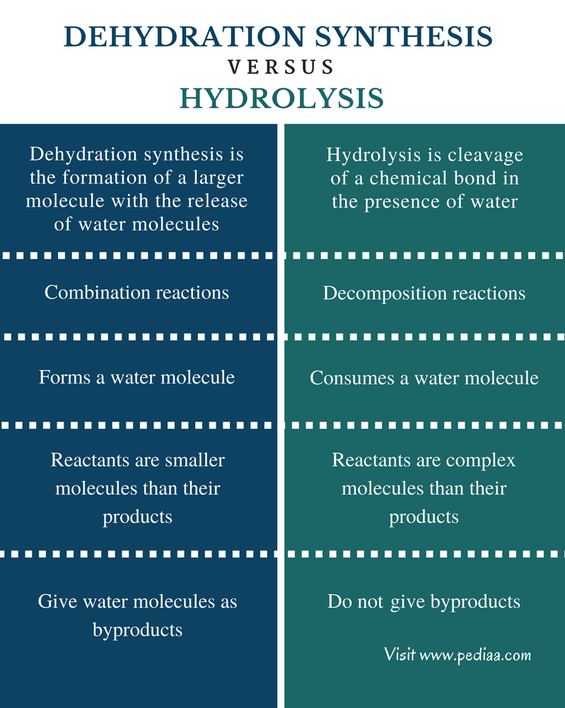 relationship between hydrolysis and dehydration synthesis