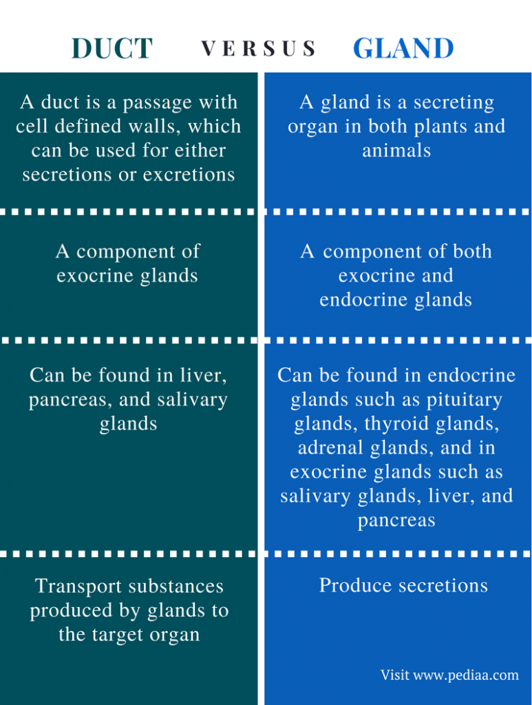 Difference Between Duct and Gland - Comparison Summary