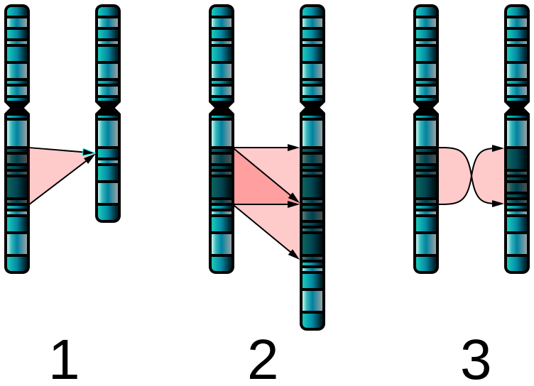 Difference Between Gene Mutation and Chromosomal Mutation