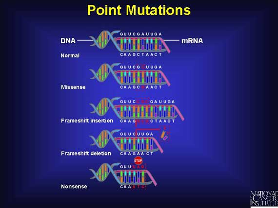 Main Difference - Gene Mutation vs Chromosomal Mutation