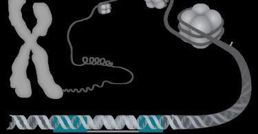 Difference Between Genetics and Genomics